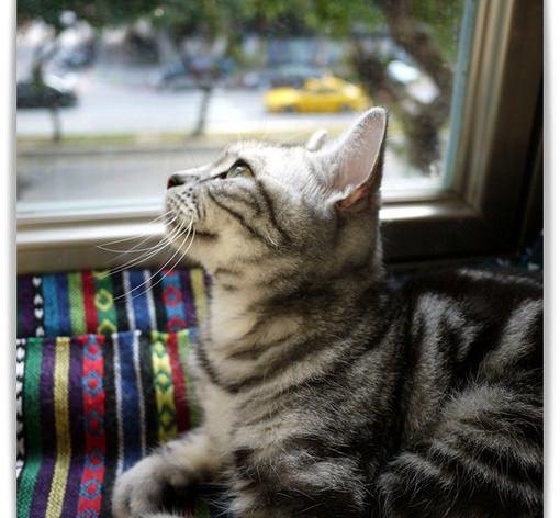 《台北貓咪咖啡》自然醒咖啡公寓。隱密二樓裡的優雅文青店貓nini,科技大樓站