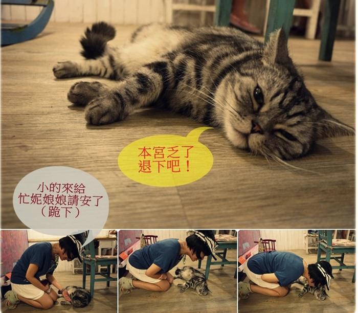 《中和貓咪咖啡》私藏不藏私。景安站雜貨咖啡店二訪