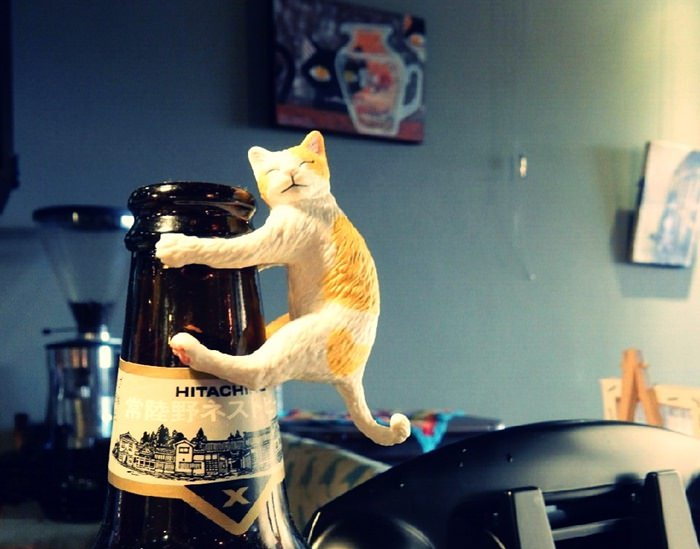 《台北貓咪咖啡》兜味咖啡Doorway Cafe 貓奴最愛人寵所在,捷運大橋頭站迪化商圈
