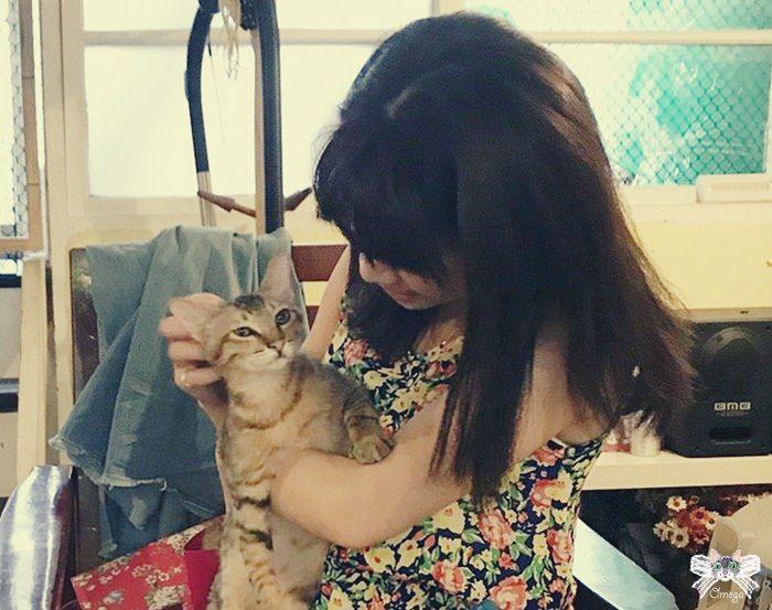 《台北貓咪咖啡》浪浪別哭。貓狗中途之家咖啡館,讓愛不流浪。