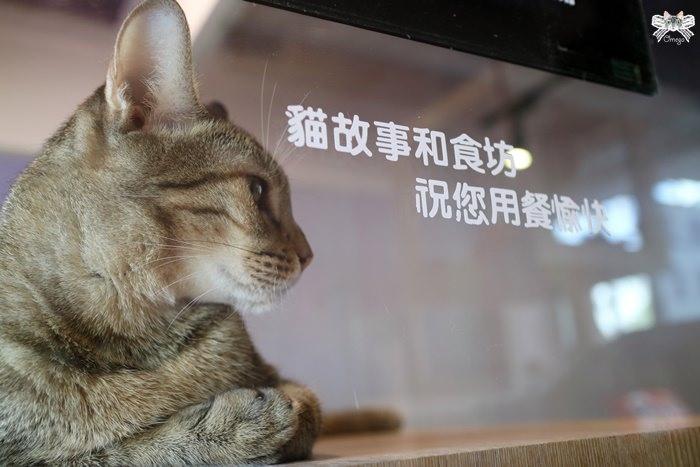 《美食*新北新莊區》貓故事和食坊。輔大站一鍋一燒專賣店白飯飲料不限,還能進貓屋互動!