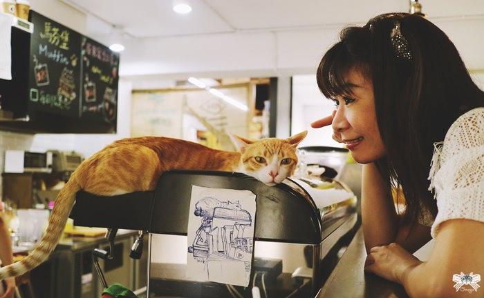《美食*台北大安區》貓圖咖啡|平價不限時的貓咪咖啡館|古亭站近師大