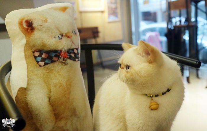 《台北貓咪咖啡》扯貓尾|民生社區香港夫妻開的貓咪港式咖啡館