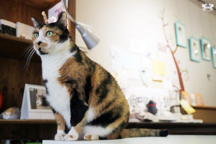 《台北貓咪咖啡》喵吧|捷運南京三民站,不限時的貓咪主題餐廳