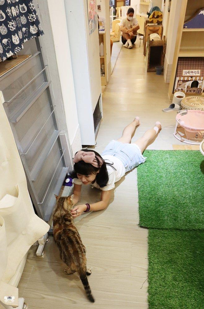 台北貓咪咖啡
