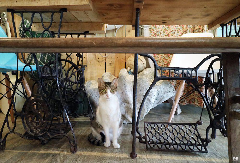 《蘇澳貓咪咖啡》探險家咖啡|地方很小位置很少老闆很帥貓咪也很萌