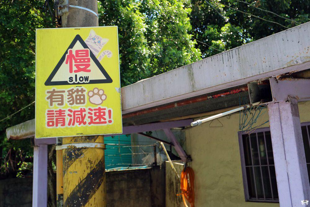 《花蓮景點》新城鄉康樂村加灣|貓咪友善小心貓出沒!
