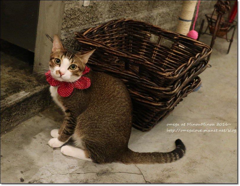 《台北貓咪咖啡》Minou Minou cafe|公館商圈有趣的二樓貓咪餐廳,貓公仔收藏豐富!